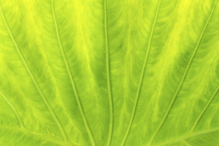 Green leaf texture photo
