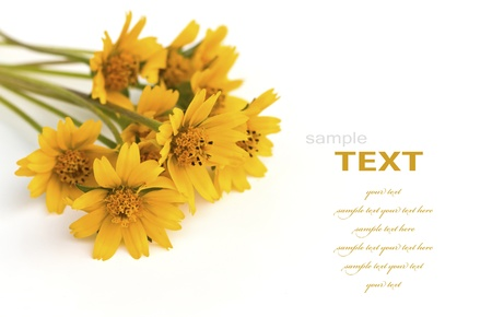 Beautiful yellow flowers isolated on white background photo