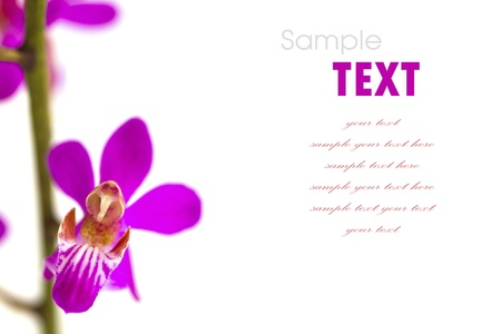 flower background: Beautiful purple-pink flower (Orchid) isolated on white background Stock Photo