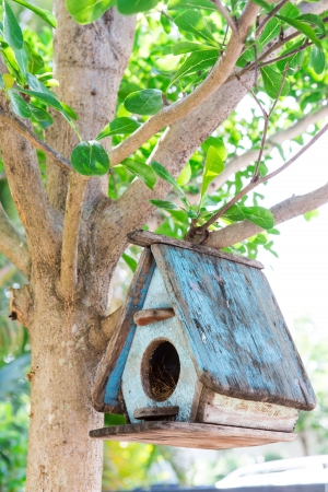 Bird House on a tree photo
