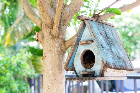 countrylife: Bird House on a tree