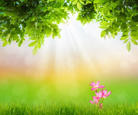 organic background: Pink flower on Fresh spring green grass with green leaf , Summer time