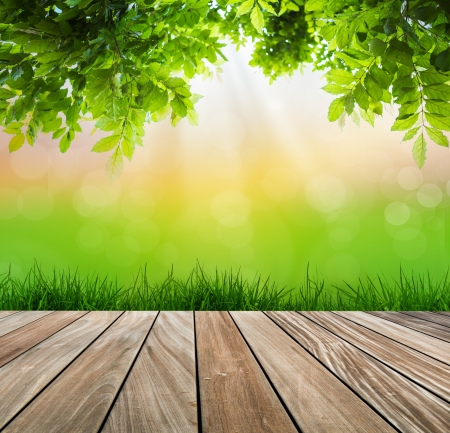venation: Fresh spring green grass and wood floor  with green leaf , Summer time
