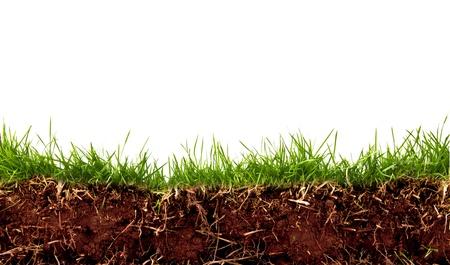 白い背景で隔離の土と新鮮な春の緑の草。
