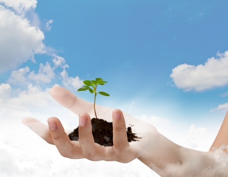 Business hand holding green small plant over blue sky with cloud photo