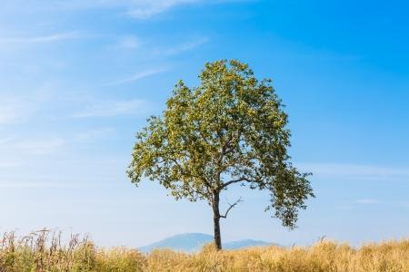 herbe ciel: Paysage d'�t� avec le ciel, l'herbe et des arbres