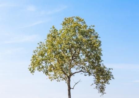 herbe ciel: Paysage d'�t� avec ciel, l'herbe et des arbres