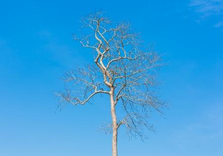 Dead tree branch against blue sky photo