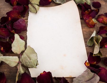 Vintage paper and dried rose photo
