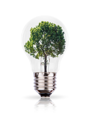 Eco concept: green tree growing in a bulb. photo