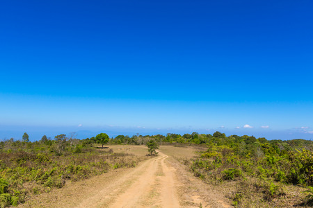 Road in forest and blue sky Stock Photo - 27043312