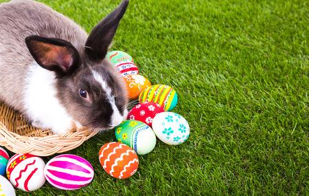 Kaninchen und Ostereier im grünen Gras Standard-Bild - 27391202