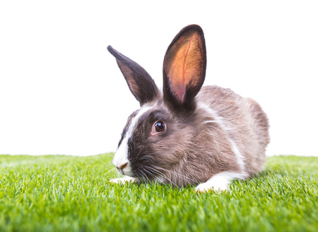 Rabbit in green grass on white background photo