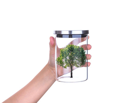 Hand hold glass jar with tree inside isolated on white background photo