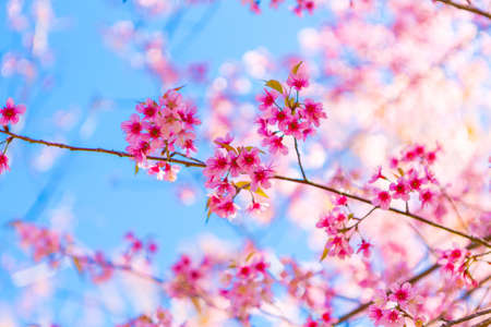 april flowers: Beautiful pink flower blossom Stock Photo