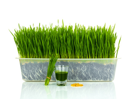 plant antioxidants: Shot glass of wheat grass with fresh cut wheat grass and wheat grains Stock Photo