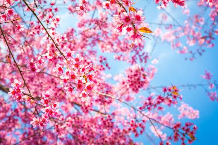 Beautiful pink flower blossom Stock Photo