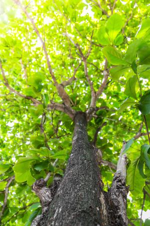 foret sapin: Green tree de for�t avec la lumi�re du soleil Banque d'images