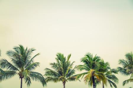코코넛 야자수 (필터링 된 이미지 빈티지 효과를 처리.) 스톡 콘텐츠