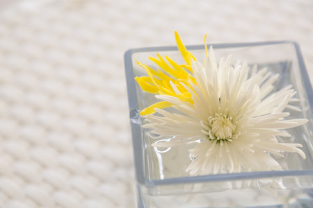 watered: Flowers in watered vase  on  table Stock Photo