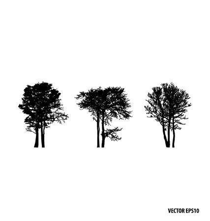 silhouette tree: Set of tree silhouettes. Vector illustration. Illustration