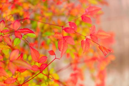 nature photo: Beautiful Colorful Autumn Leaves Stock Photo