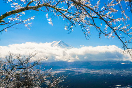 coating: Mountain Fuji with ice coating on the trees Stock Photo
