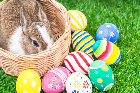 pascuas navideÑas: Conejo y huevos de Pascua en la hierba verde