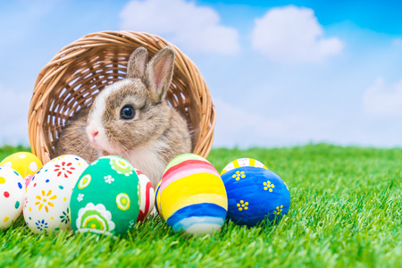 Rabbit and easter eggs in green grass with blue sky