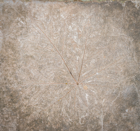 impression: Leaf impression in stone Stock Photo