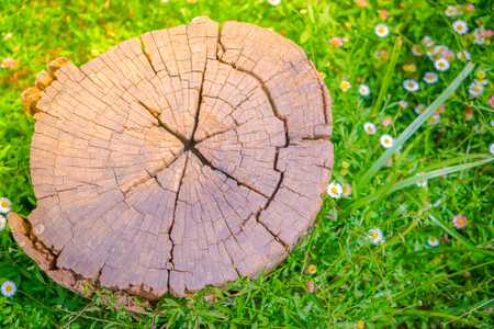 annual ring annual ring: Close up of Stump tree on green grass with flower Stock Photo