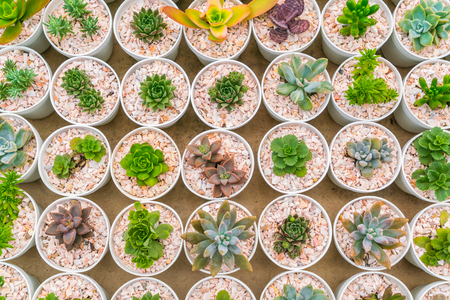 Beautiful small cactus field Stock Photo