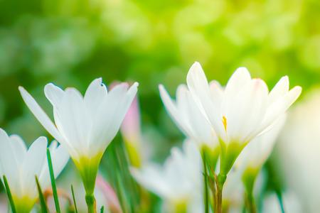 Beautiful white bunch flowers on green grass background stock photo beautiful white bunch flowers on green grass background stock photo 61346156 mightylinksfo