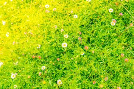 Beautiful White bunch flowers on green grass background Stock Photo