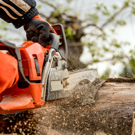 Firewood saws with a chainsaw Stock Photo