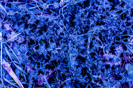 Blue colored weeds