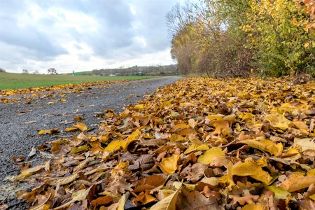 Small road / hiking trail full of colorful autumn leaves and copy space Standard-Bild - 116295390