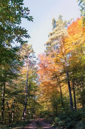 Hiking trail road through an autumnal forest in the sunshine Standard-Bild - 116295395
