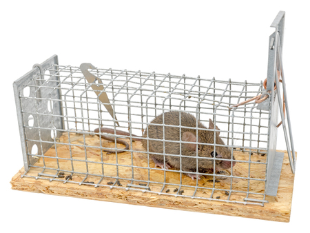 Little mouse sits trapped in a wire trap against blurred background