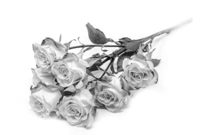 Many Bright monochrom bush roses soft against white background Stock Photo