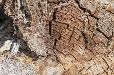 Old and decayed interface of a felled tree as a background