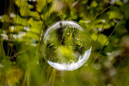 Glass ball floats between blades of grass with mirrored trees and cloudy blue sky Фото со стока