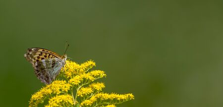 Little butterfly sits on a blossom in front of green blurred background with copy space