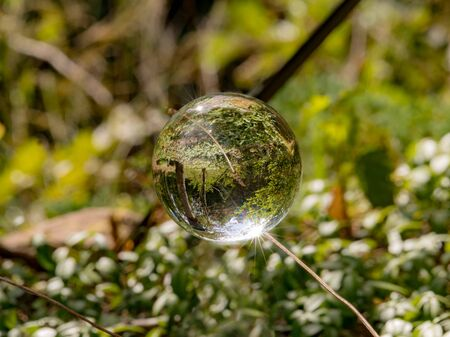 Glass ball floats between blades of grass with mirrored trees and cloudy sky Фото со стока