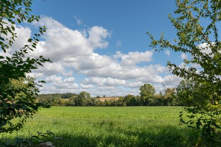 View through trees on a green field with hills and cloudy blue sky Фото со стока