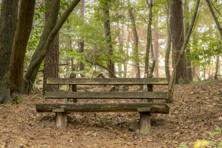 Old bench of thick dark brown wooden beams stands in the forest under deciduous trees on a hill