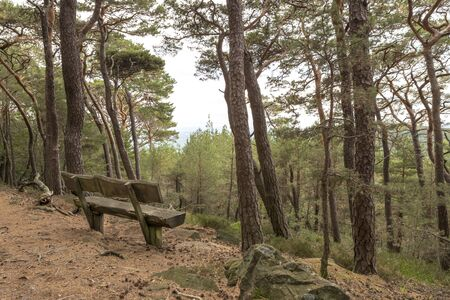 Old bench of thick dark brown wooden beams stands in the forest under coniferous trees on a hill overlooking a valley Фото со стока