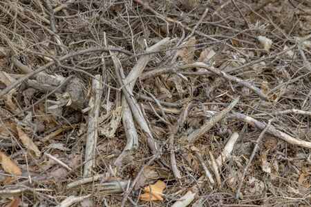 Background of many small wood branches and pine needles and dry leaves