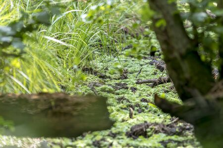 German bog forest landscape with fern, moss, grass and deciduous trees in summer as background Фото со стока