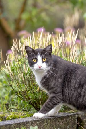 Cat with yellow eyes looks directly at the camera. Against a green background